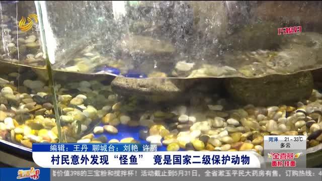 """村民意外发现""""怪鱼"""" 竟是国家二级保护动物"""