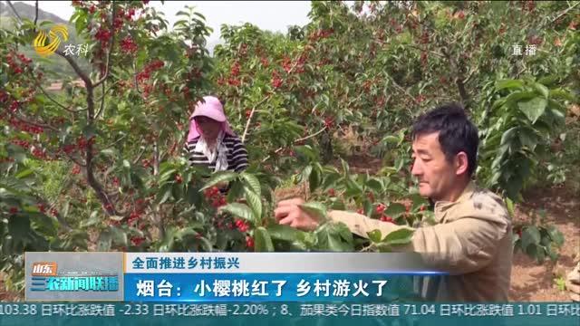 【全面推进乡村振兴】烟台:小樱桃红了 乡村游火了