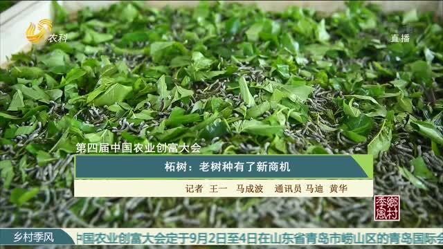 【第四届中国农业创富大会】柘树:老树种有了新商机