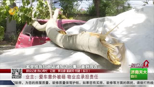 """【群众记者 热心帮忙】济南:大风刮断树枝 树下两车""""遭了殃"""""""