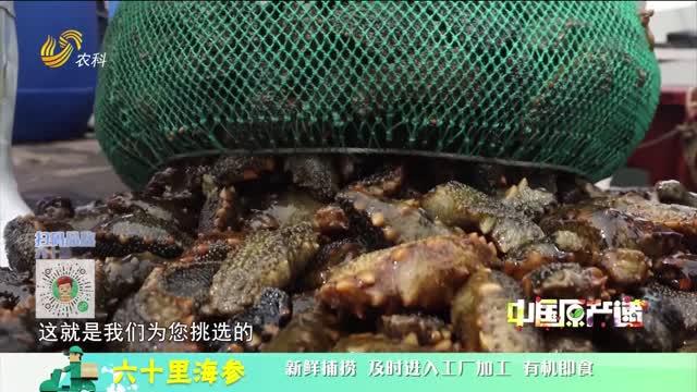 20210529《中国原产递》:六十里海参