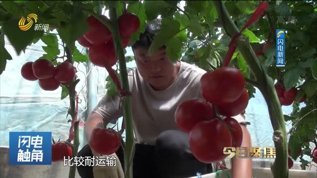 """蔬菜之鄉探秘""""蔬菜芯片"""""""