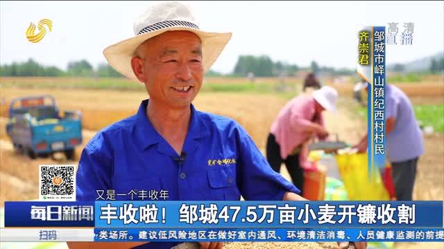 丰收啦!邹城47.5万亩小麦开镰收割