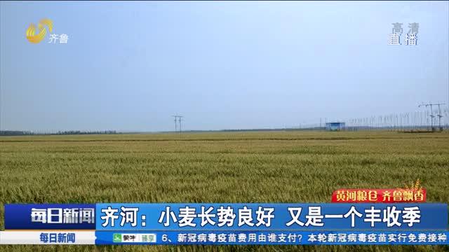 齐河:小麦长势良好 又是一个丰收季