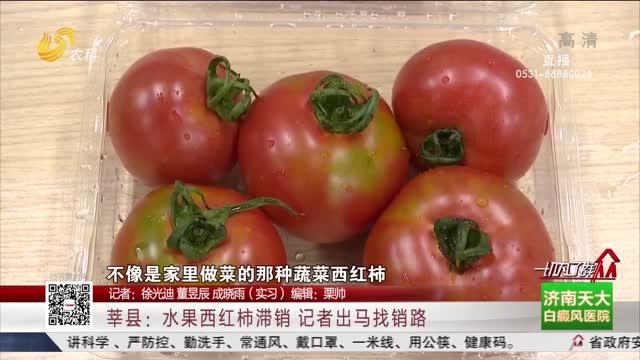 莘县:水果西红柿滞销 记者出马找销路