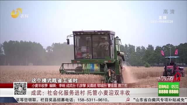 【小麦丰收季】成武:社会化服务进村 托管小麦迎双丰收