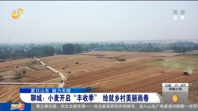"""聊城:小麦开启""""丰收季"""" 绘就乡村美丽画卷"""