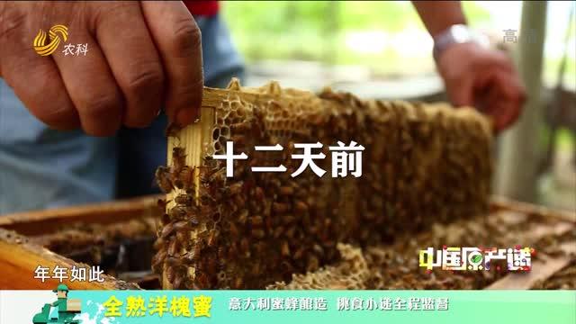20210615《中国原产递》:全熟洋槐蜜