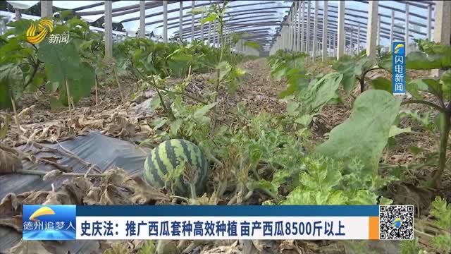 史慶法:推廣西瓜套種高效種植 畝產西瓜8500斤以上