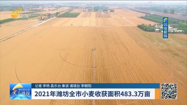 2021年濰坊全市小麥收獲面積483.3萬畝