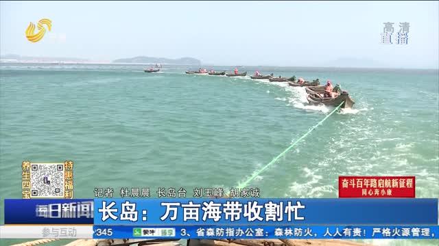 长岛:万亩海带收割忙