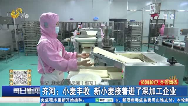 齐河:小麦丰收 新小麦接着进了深加工企业