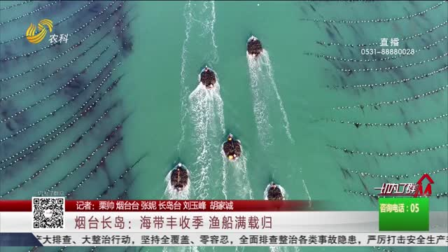 烟台长岛:海带丰收季 渔船满载归