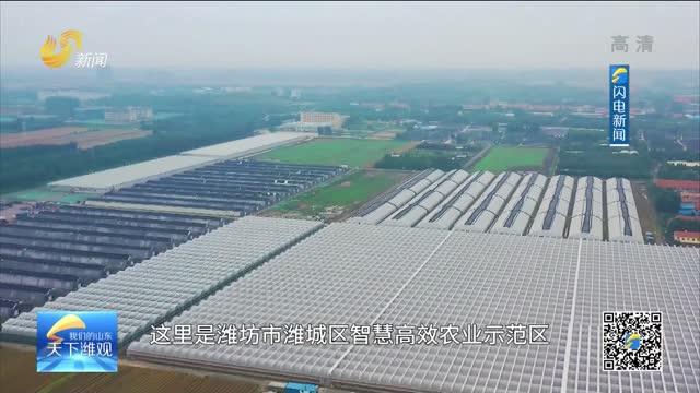 濰坊魯盛農業:打造智慧型現代都市農業示范園區