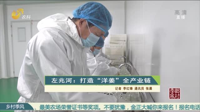 """左兆河:打造""""洋姜""""全產業鏈"""
