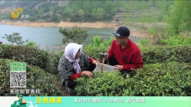 20210710《中國原產遞》:日照綠茶