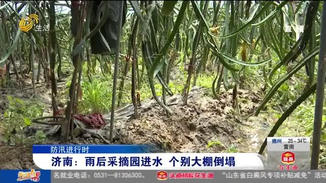【防汛進行時】濟南:雨后采摘園進水 個別大棚倒塌
