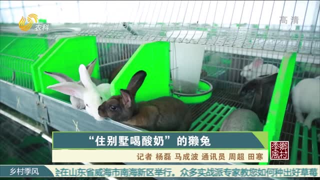 """""""住別墅喝酸奶""""的獺兔"""