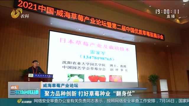 """【威海草莓產業論壇】聚力品種創新 打好草莓種業""""翻身仗"""""""