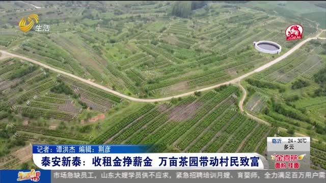 泰安新泰:收租金挣薪金 万亩茶园带动村民致富