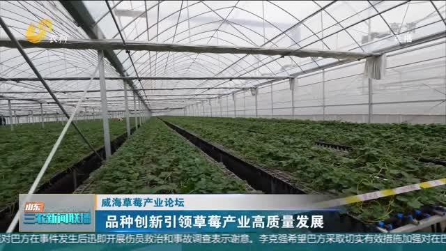 【威海草莓產業論壇】品種創新引領草莓產業高質量發展
