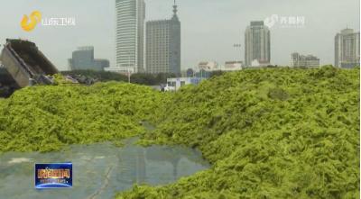曾贊榮在青島調研滸苔綠潮災害應急處置工作