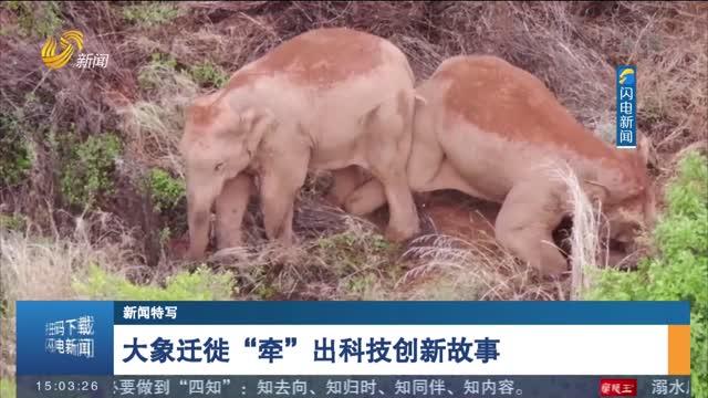 """【新聞特寫】大象遷徙""""牽""""出科技創新故事"""