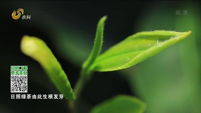 20210719《中国原产递》:日照绿茶