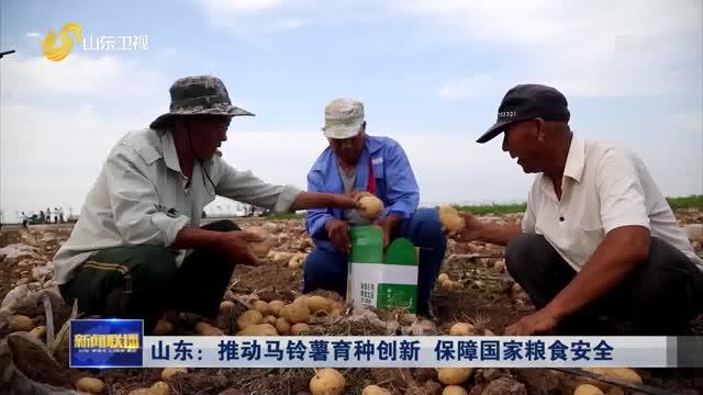山东:推动马铃薯育种创新 保障国家粮食安全