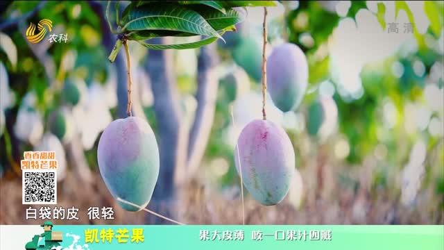 20210723《中国原产递》:凯特芒果
