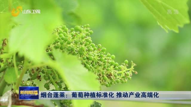 烟台蓬莱:葡萄种植标准化 推动产业高端化