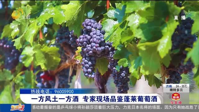 一方风土一方酒 专家现场品鉴蓬莱葡萄酒