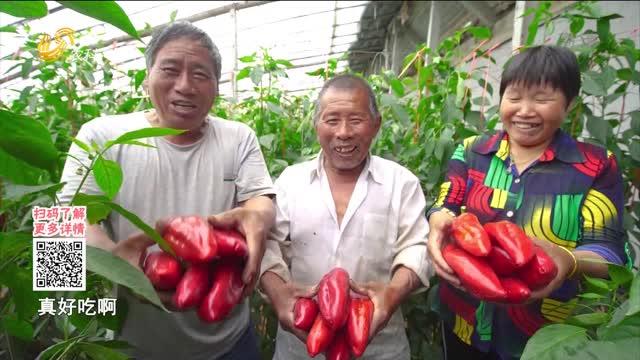20210803《中国原产递》:鲜椒酱