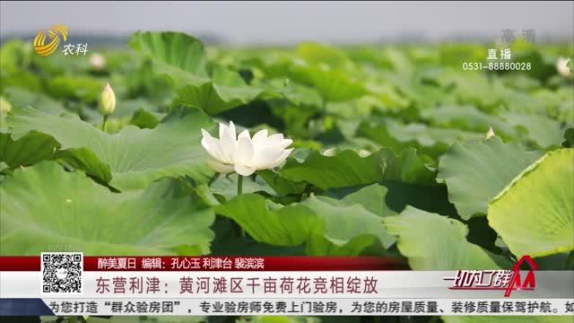 【醉美夏日】东营利津:黄河滩区千亩荷花竞相绽放