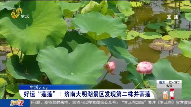 """【生活vlog】好运""""莲莲""""!济南大明湖景区发现第二株并蒂莲"""