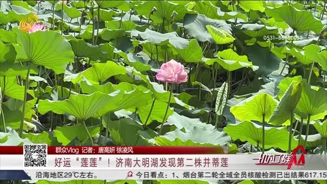 """【群众Vlog】好运""""莲莲""""!济南大明湖发现第二株并蒂莲"""