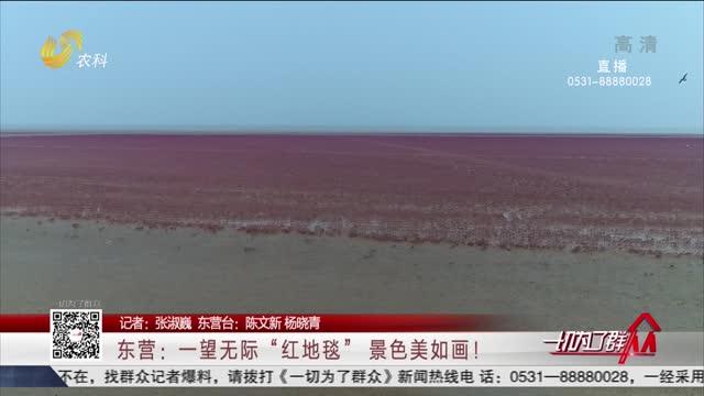"""东营:一望无际""""红地毯"""" 景色美如画!"""