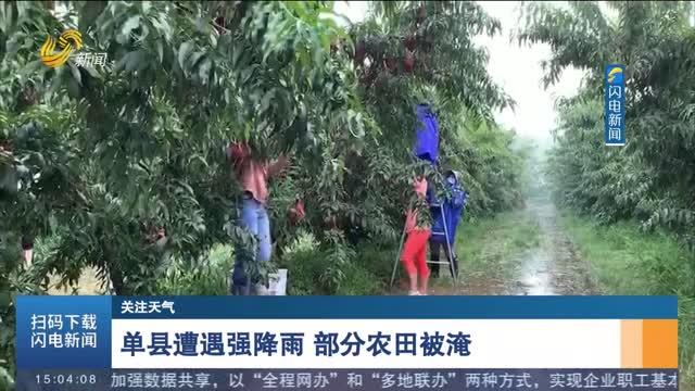 【关注天气】单县遭遇强降雨 部分农田被淹