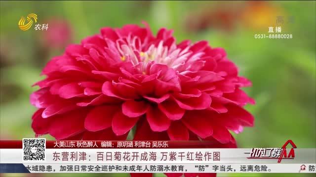 【大美山东 秋色醉人】东营利津:百日菊花开成海 万紫千红绘作图