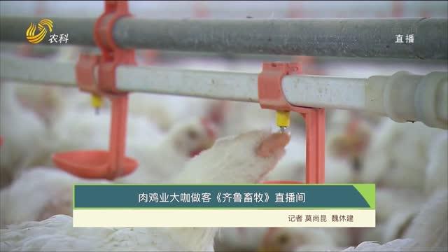 肉鸡业大咖做客《齐鲁畜牧》直播间