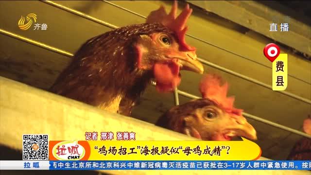 """费县:""""鸡场招工""""海报网络走红"""
