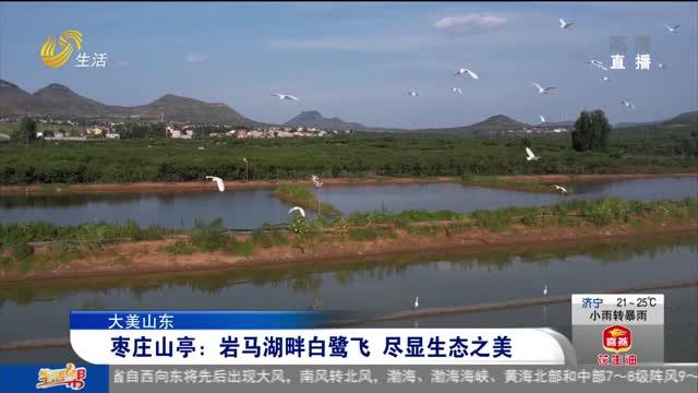 【大美山东】枣庄山亭:岩马湖畔白鹭飞 尽显生态之美