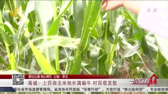 【群众记者 热心帮忙】禹城:上百亩玉米地长满蜗牛村民很发愁