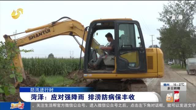 【防汛进行时】菏泽:应对强降雨 排涝防病保丰收