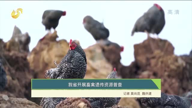 【齐鲁畜牧】我省开展畜禽遗传资源普查
