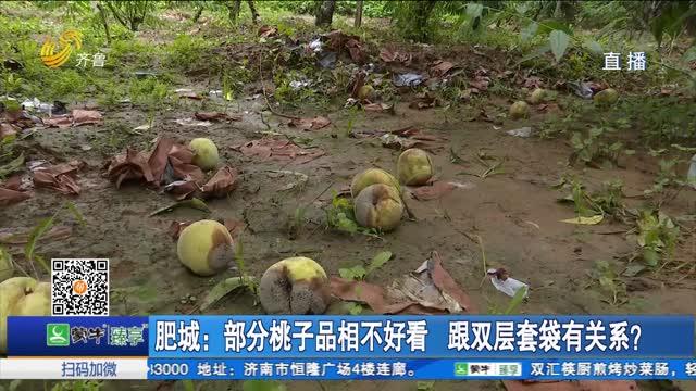 肥城:部分桃子品相不好看 跟双层套袋有关系?