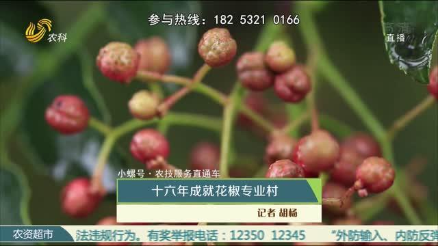 【小螺号·农技服务直通车】十六年成就花椒专业村