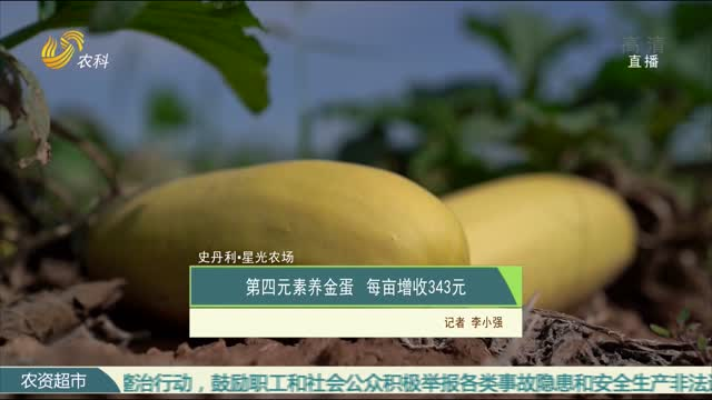 【史丹利·星光农场】第四元素养金蛋 每亩增收343元