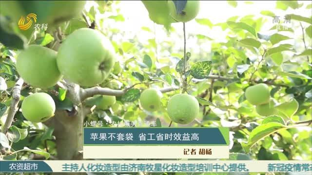 【小螺号·农技服务直通车】苹果不套袋 省工省时效益高