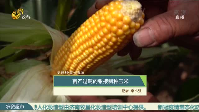 【史丹利·星光农场】亩产过吨的张掖制种玉米